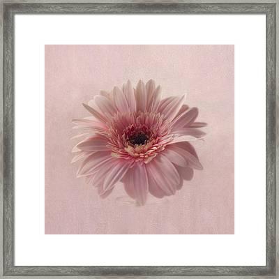 Pink Pink Pink Framed Print by Kim Hojnacki