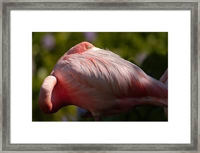 Pink Framed Print by Sebastian Musial