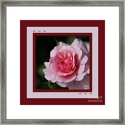 Pink Shades Of Rose With Design Framed Print by Joy Watson