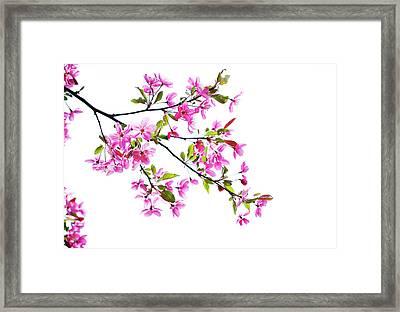 Pink Spring Framed Print by Marilyn Hunt