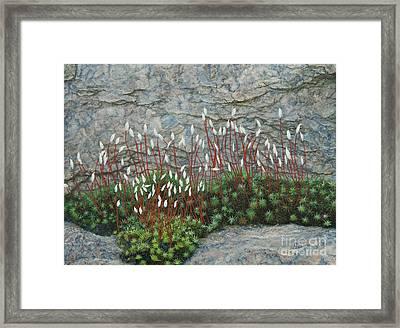 Pink Stony Creek Granite Still Life Study Framed Print by Cindy Lee Longhini