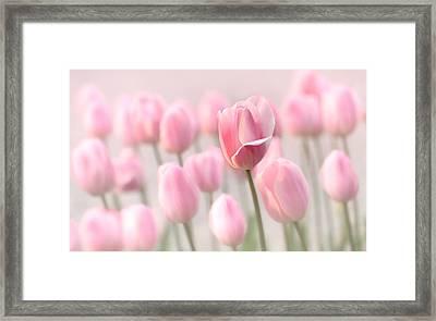 Pink Tulip Cloud Framed Print by Mary Jo Allen