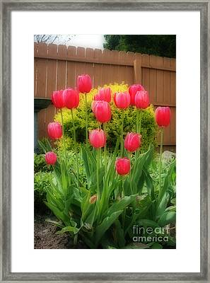 Pink Tulip Flowers Framed Print by Kay Novy