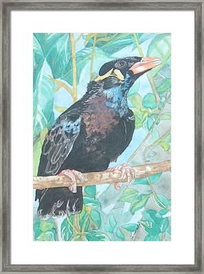 Pio  Xvi Framed Print by Arte Ivanna