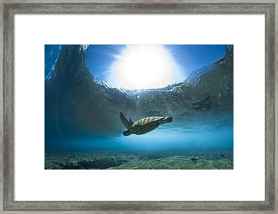 Pipe Turtle Glide  -  Part 1 Of 3 Framed Print by Sean Davey