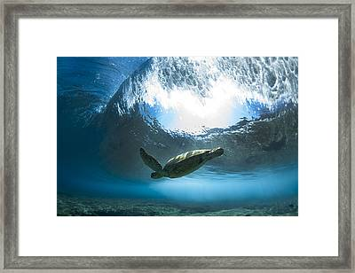 Pipe Turtle Glide  -  Part 2 Of 3 Framed Print by Sean Davey