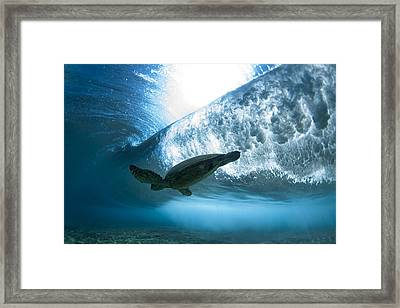 Pipe Turtle Glide  -  Part 3 Of 3 Framed Print by Sean Davey