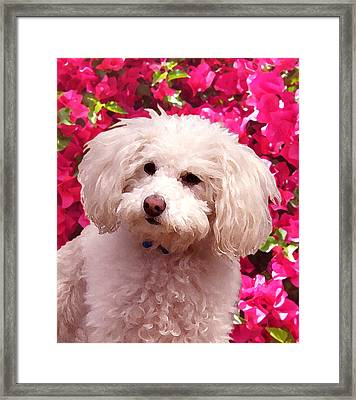 Pippy  Framed Print by Amy Vangsgard