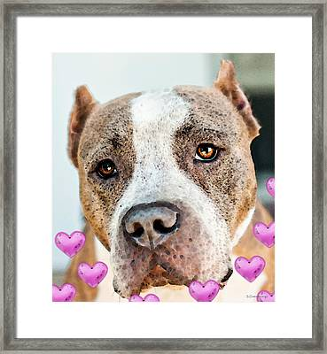 Pit Bull Dog - Pure Love Framed Print by Sharon Cummings