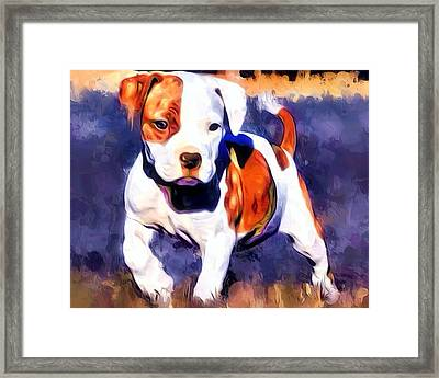 Pit Bull Pup Portrait Framed Print by Scott Wallace