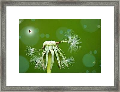 Pixie Wishes Framed Print by Lisa Knechtel