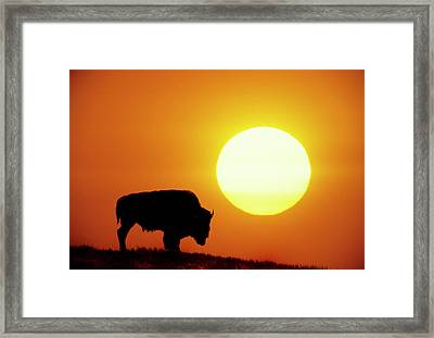 Plains Bison (bison Bison), Digital Composite Framed Print by Altrendo Nature