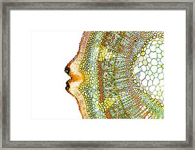 Plant Breathing Pore, Light Micrograph Framed Print by Dr Keith Wheeler