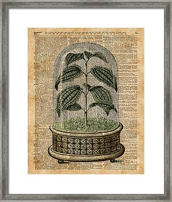 Plant Under Bell-glass Vintage Illustration Over A Old Dictionary Page  Framed Print by Jacob Kuch