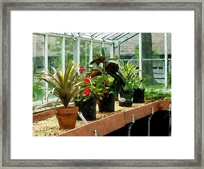 Plants In Greenhouse Framed Print by Susan Savad