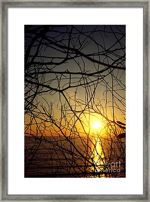 Plants On Sunset Framed Print by Carlos Caetano