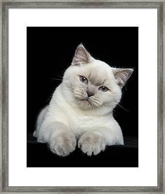 Play With Me Framed Print by Robert Sijka