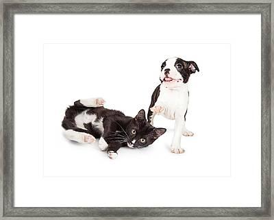Playful Kitten And Puppy Playing Framed Print by Susan Schmitz