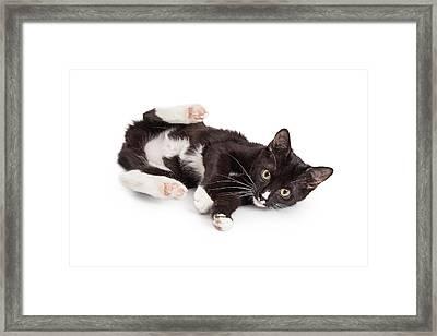 Playful Kitten With Back Legs Up Framed Print by Susan Schmitz