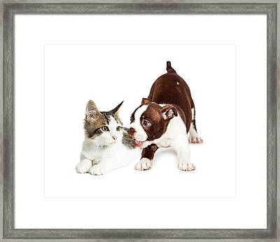 Playful Puppy And Annoyed Kitten Framed Print by Susan Schmitz