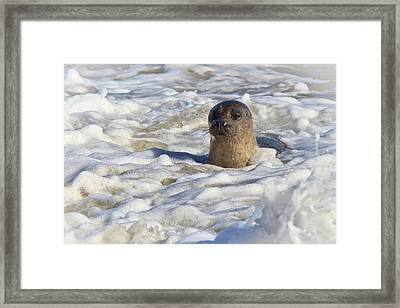 Playing In The Foam Framed Print by Carl Jackson