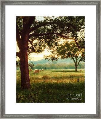 Pleasant Morning Framed Print by Tamyra Ayles