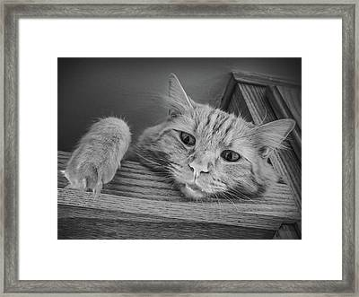 Please Don't Make Me Come Down Framed Print by Guy Whiteley