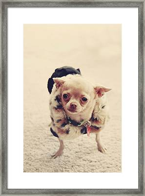 Please Meet Zoe Framed Print by Laurie Search