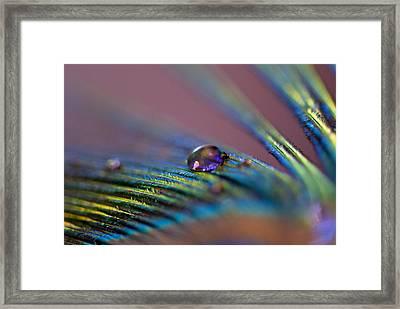 Plum Heart Framed Print by Lisa Knechtel