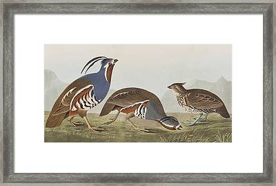 Plumed Partridge Framed Print by John James Audubon