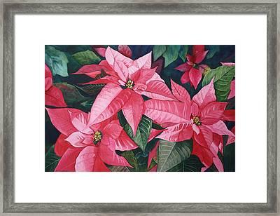 Poinsettia Trio Framed Print by Tina  Sander