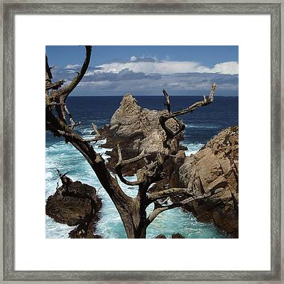Point Lobos Rocks And Branches Framed Print by Charlene Mitchell