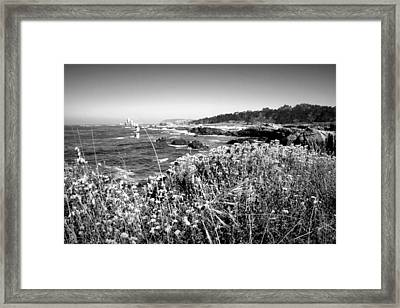 Point Lobos Shore In Bloom B And W Framed Print by Joyce Dickens