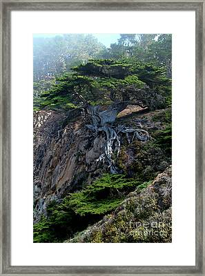 Point Lobos Veteran Cypress Tree Framed Print by Charlene Mitchell