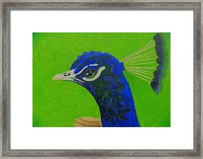 Poised Peacock  Framed Print by Keely Keeney