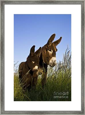 Poitou Donkey And Foal Framed Print by Jean-Louis Klein & Marie-Luce Hubert