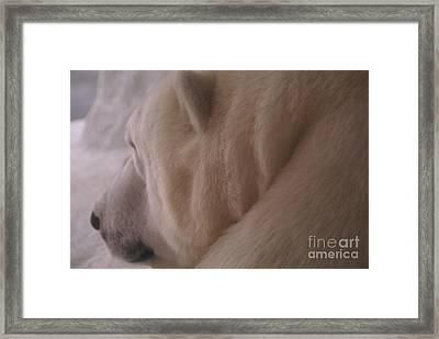 Polar Dream Framed Print by Linda Shafer