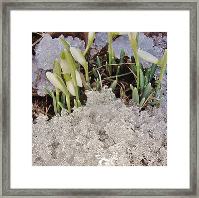 Polar Plunge Framed Print by Pixel Productions