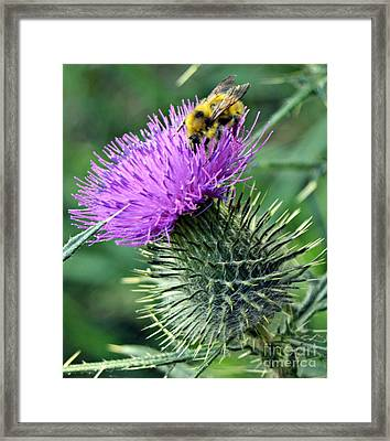 Pollination Framed Print by Chalet Roome-Rigdon