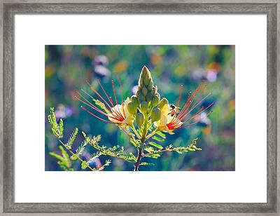 Pollination Framed Print by Ram Vasudev