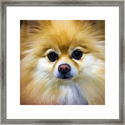 Pomeranian Framed Print by Thanh Thuy Nguyen