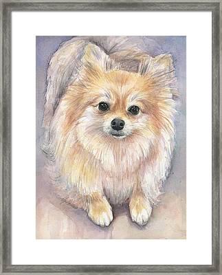 Pomeranian Watercolor Framed Print by Olga Shvartsur