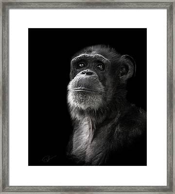 Ponder Framed Print by Paul Neville