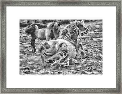 Ponies Framed Print by Contemporary  Art