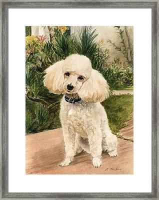 Poodle In Garden Framed Print by Phyllis Tarlow