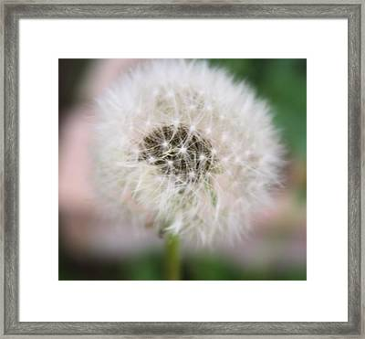 Poof Framed Print by Lynnette Johns