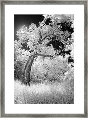 Poplars Under The Sun Framed Print by Dan Jurak