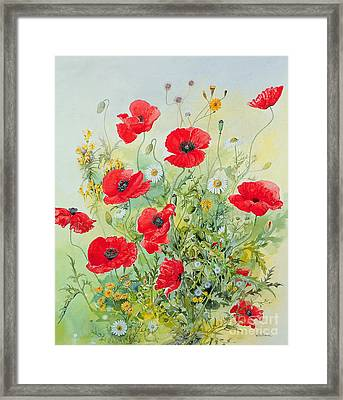 Poppies And Mayweed Framed Print by John Gubbins