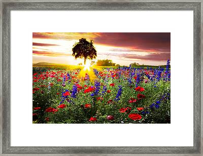 Poppies At Sunset Framed Print by Debra and Dave Vanderlaan
