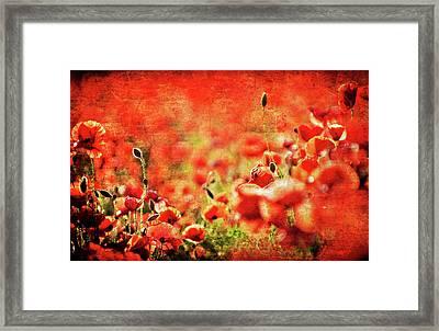 Poppies Framed Print by Meirion Matthias